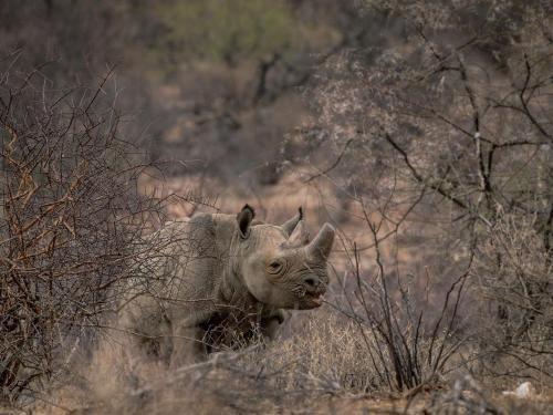 The Rhino