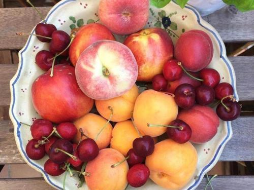 frutta-mare-marche.jpg
