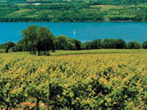 Western New York Vineyards