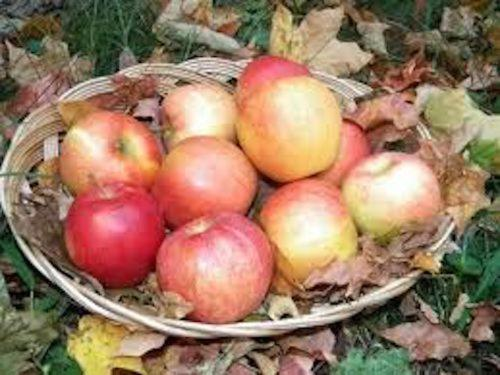 Apple Squeeze - Fall Fun in the Berkshires!