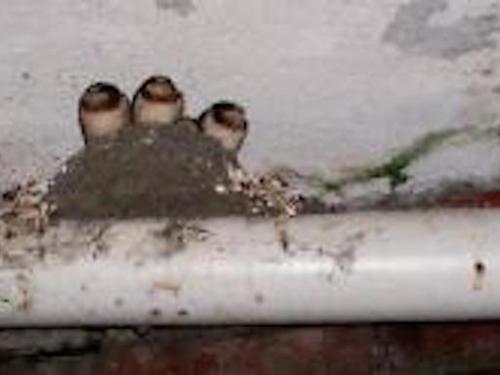 Bird Watching at the Elkhorn Inn!