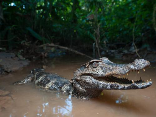 Amazon Rainforest Lodge in Tena Ecuador