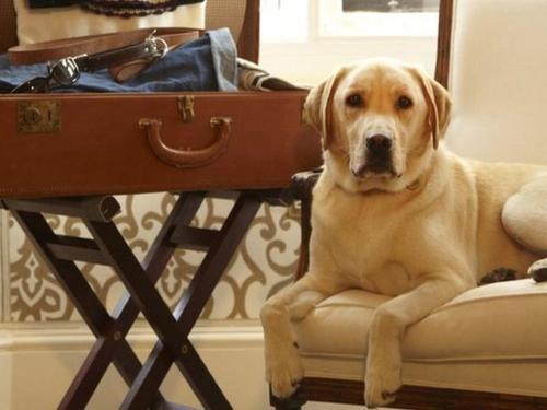 Pet Friendly Services Comfort Inn Oceanside Deerfield Beach Hotel