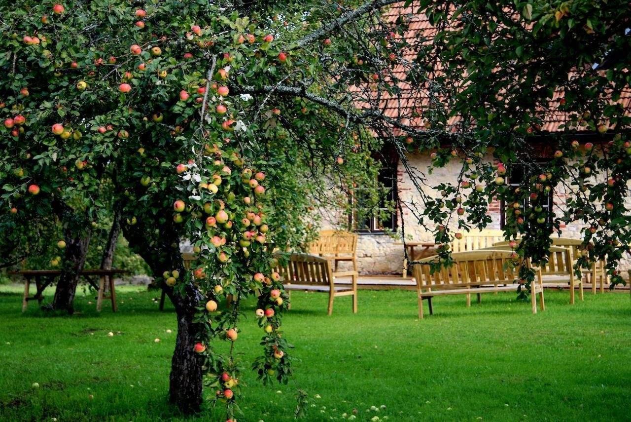 récolte de pommes à Karlamuiza