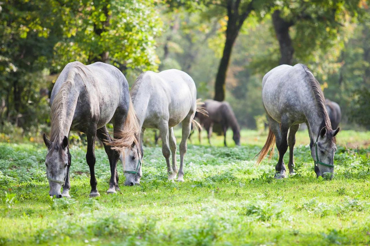 ogled-kobilarne-web.jpg