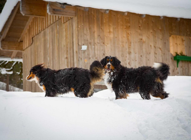 Unsere Hunde Keks & Erzsók