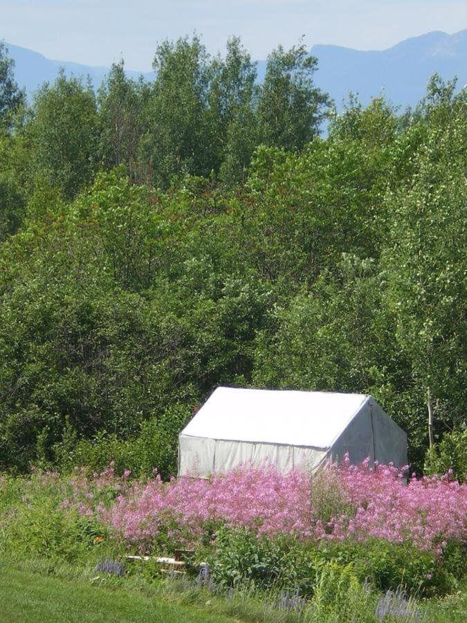 Prospector campamento para los amigos innatendus