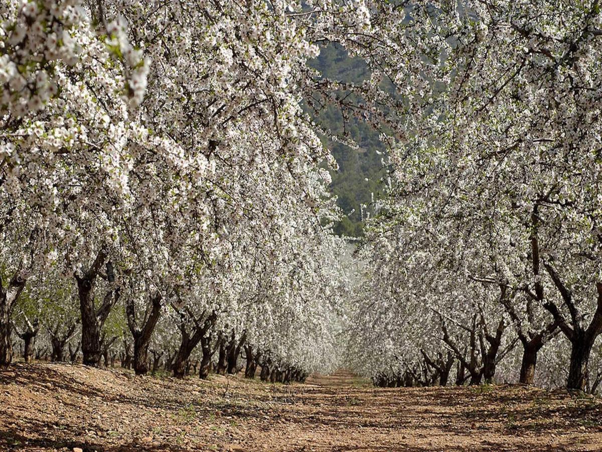 amendoeiras-em-flor.jpg
