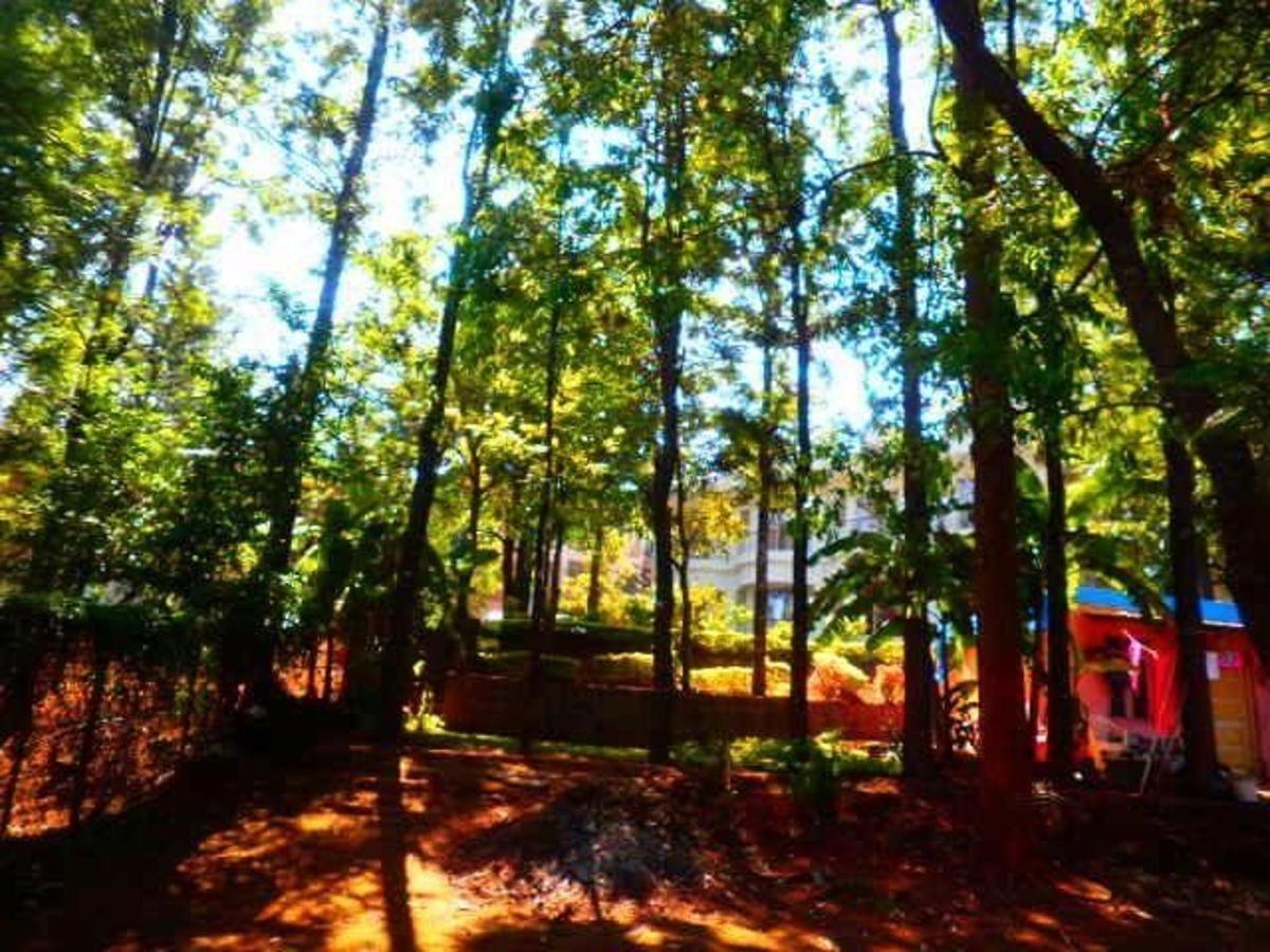 Trinity's whispering silver oak trees