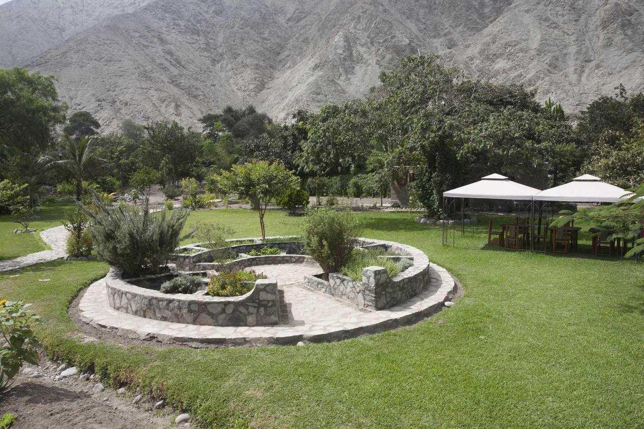 Hierbas jardín .jpg