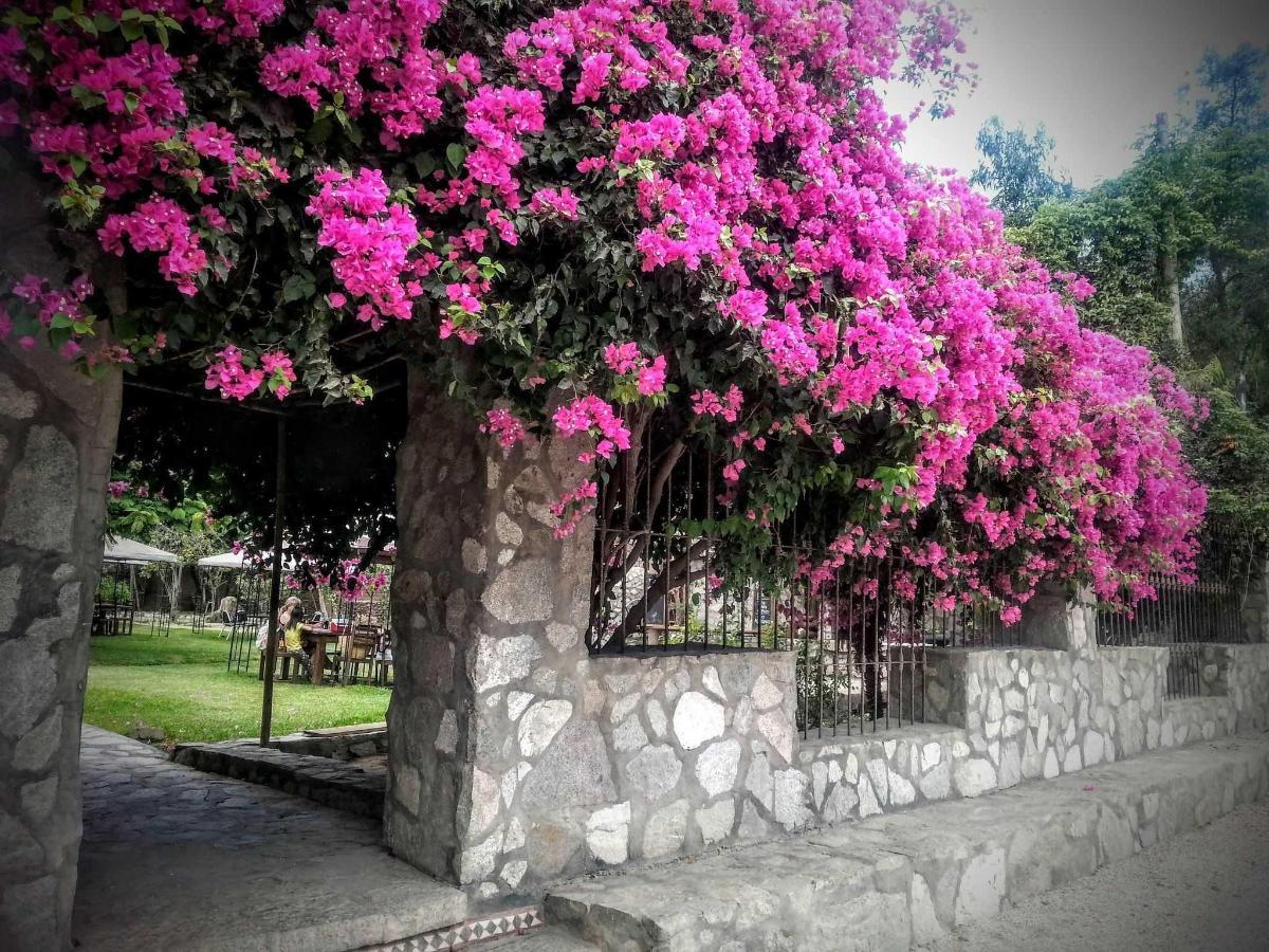 Entrada garden.jpg
