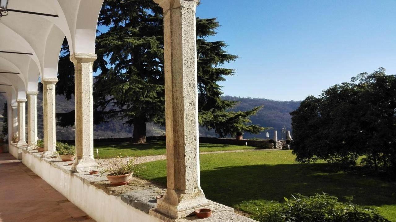 Castello degli Angeli centenary cedar.jpg