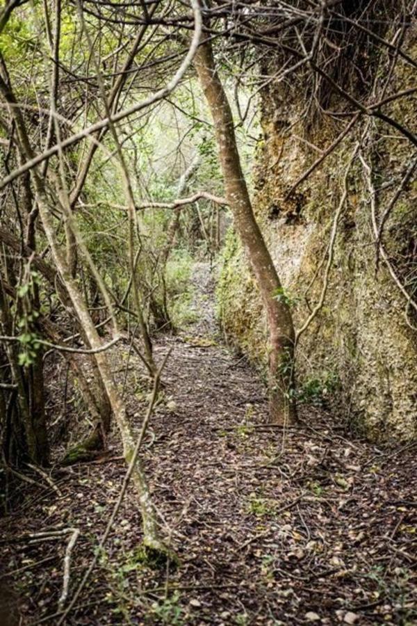 walking-trail-river.jpg