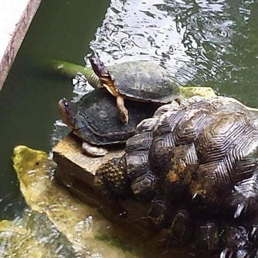 turtle_love_at_casasofia.jpg