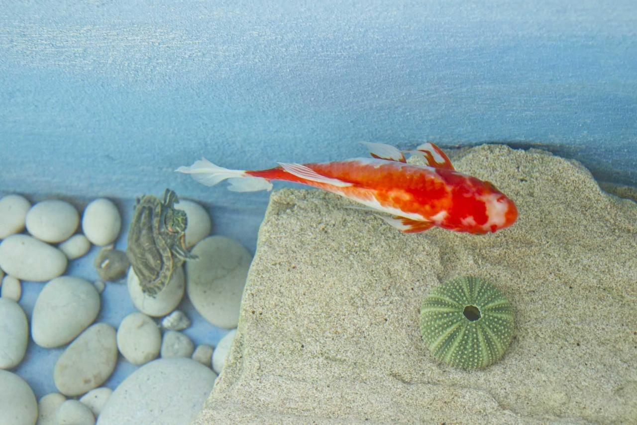 Золотая рыбка и черепахи