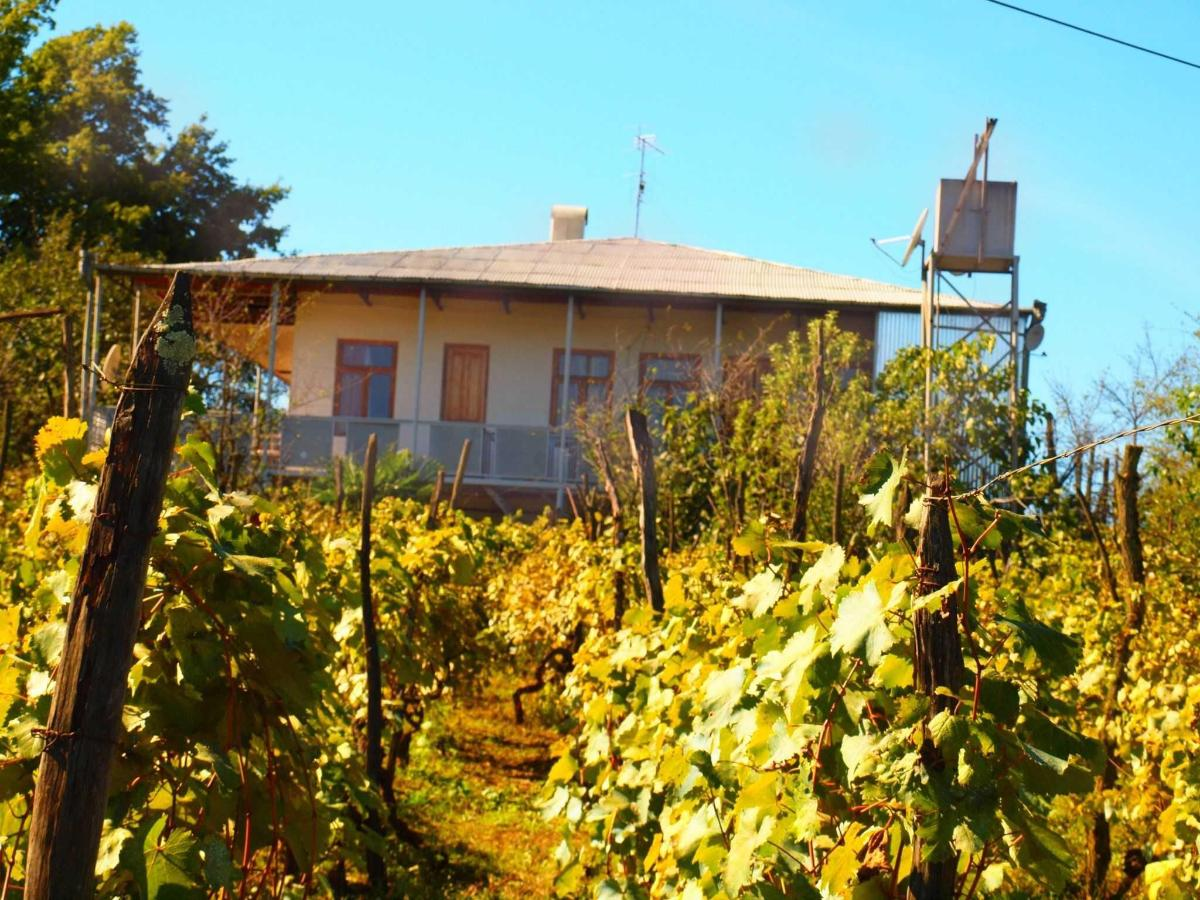 Zedafoni Vineyard