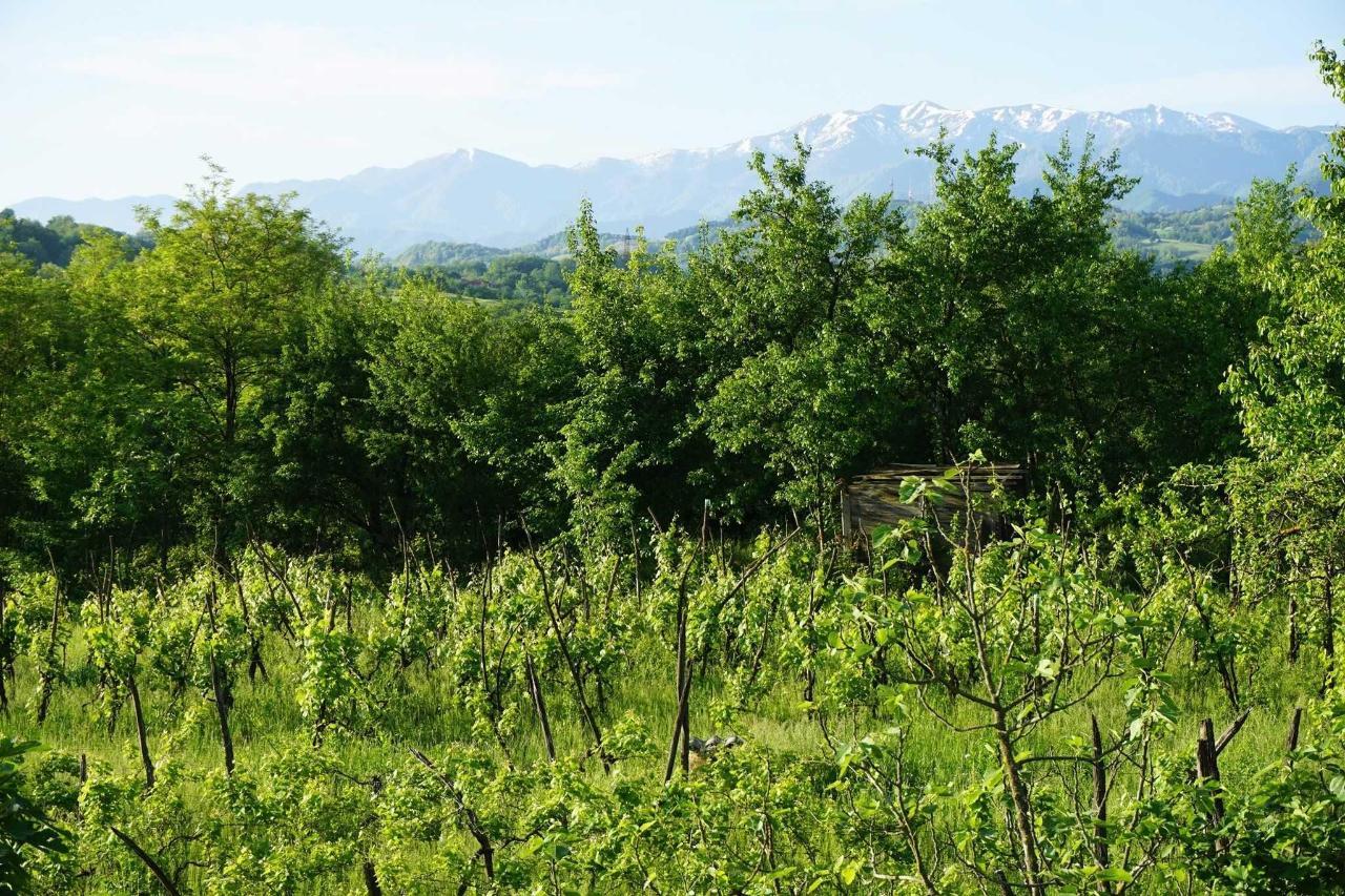 Zedafoni Landscape