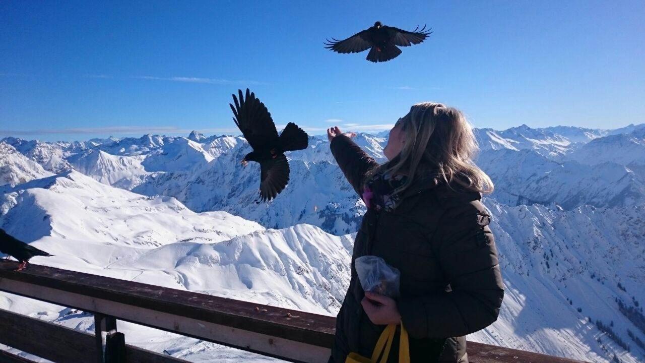 Bergdohlen утра Nebelhorn.jpg
