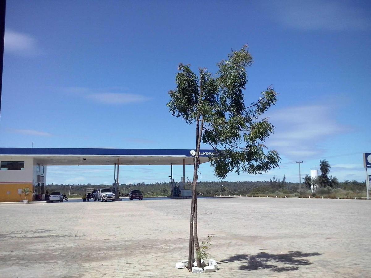Pátio / Estacionamento