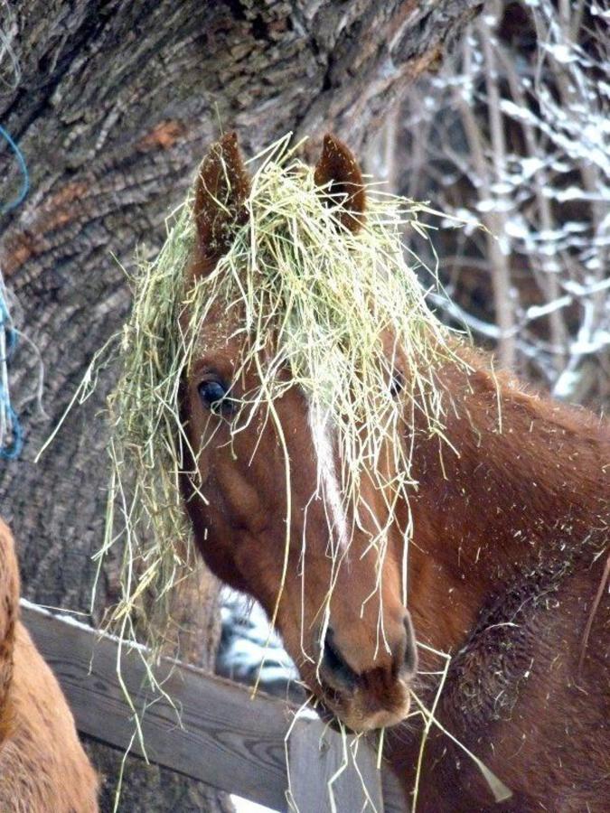 Winter_Horses3