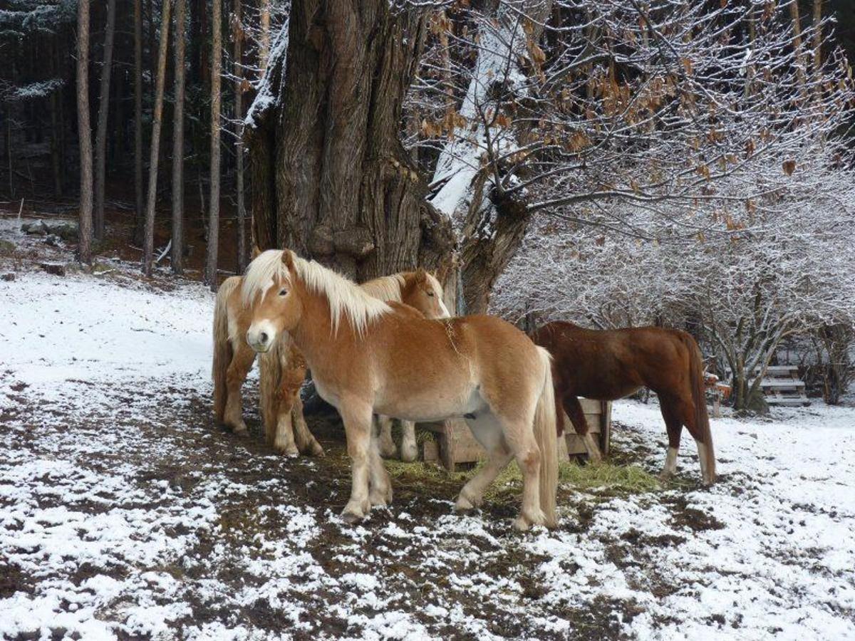 Winter_Horses2
