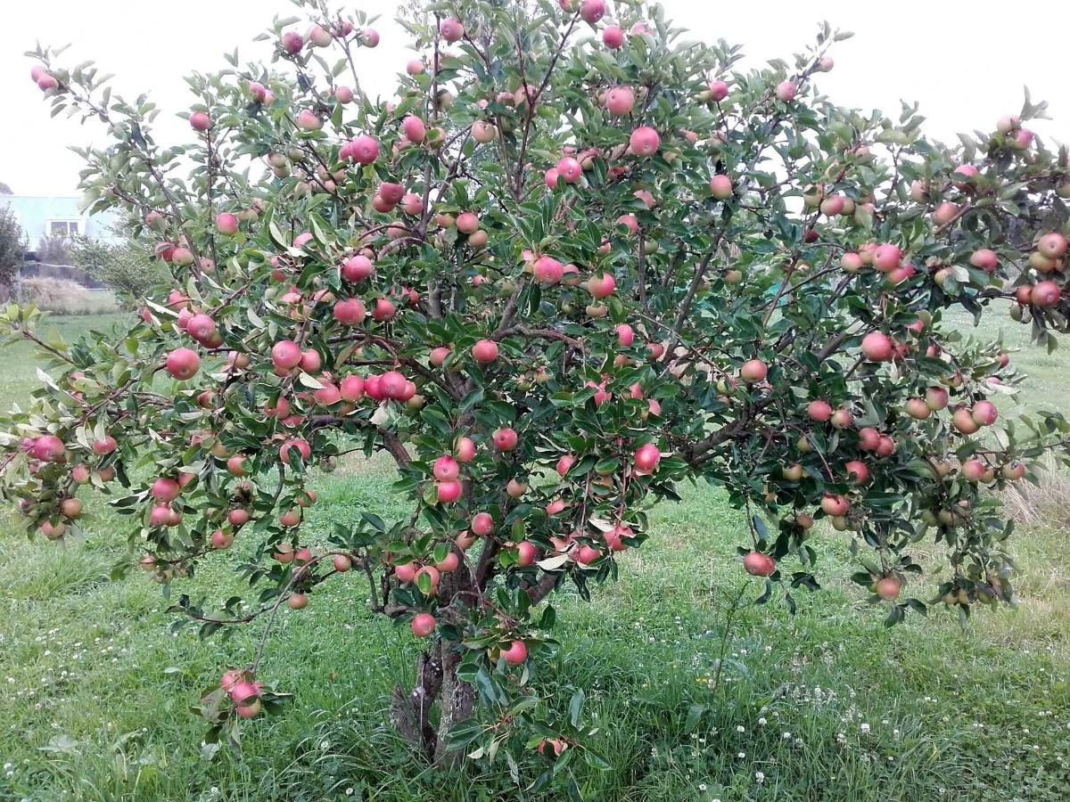 Orchard fresh fruit in season.jpg
