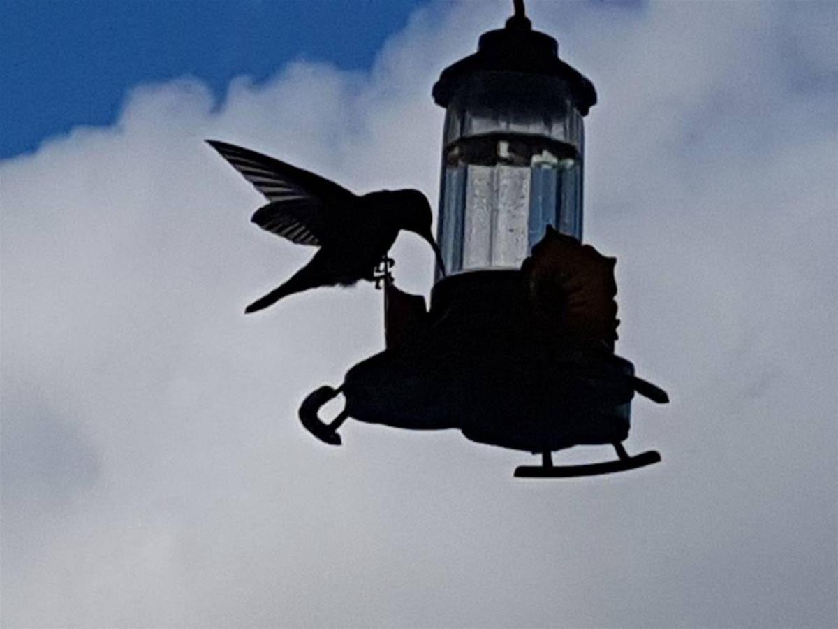 Aves (1) .jpg