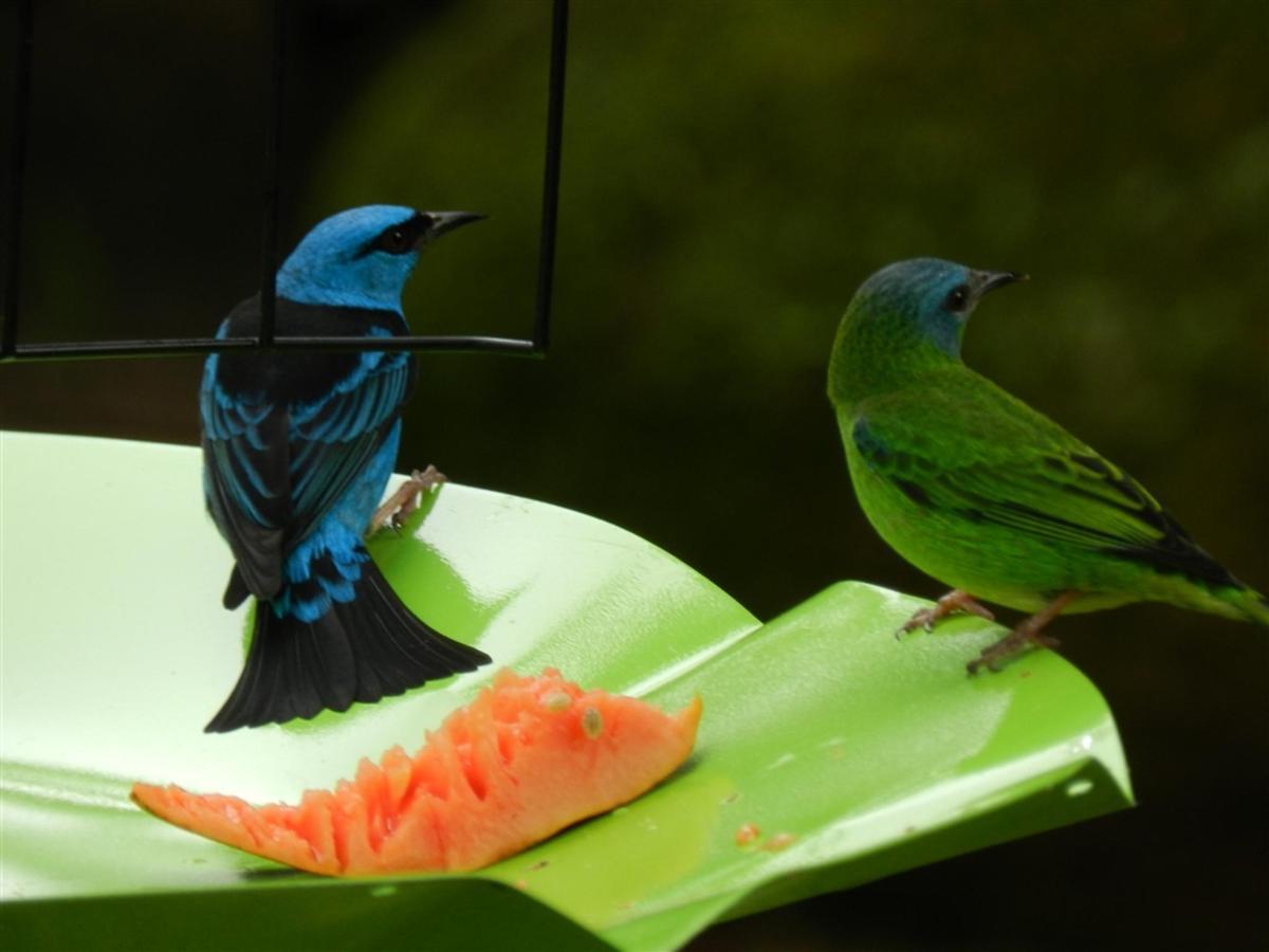 Aves (4) .jpg