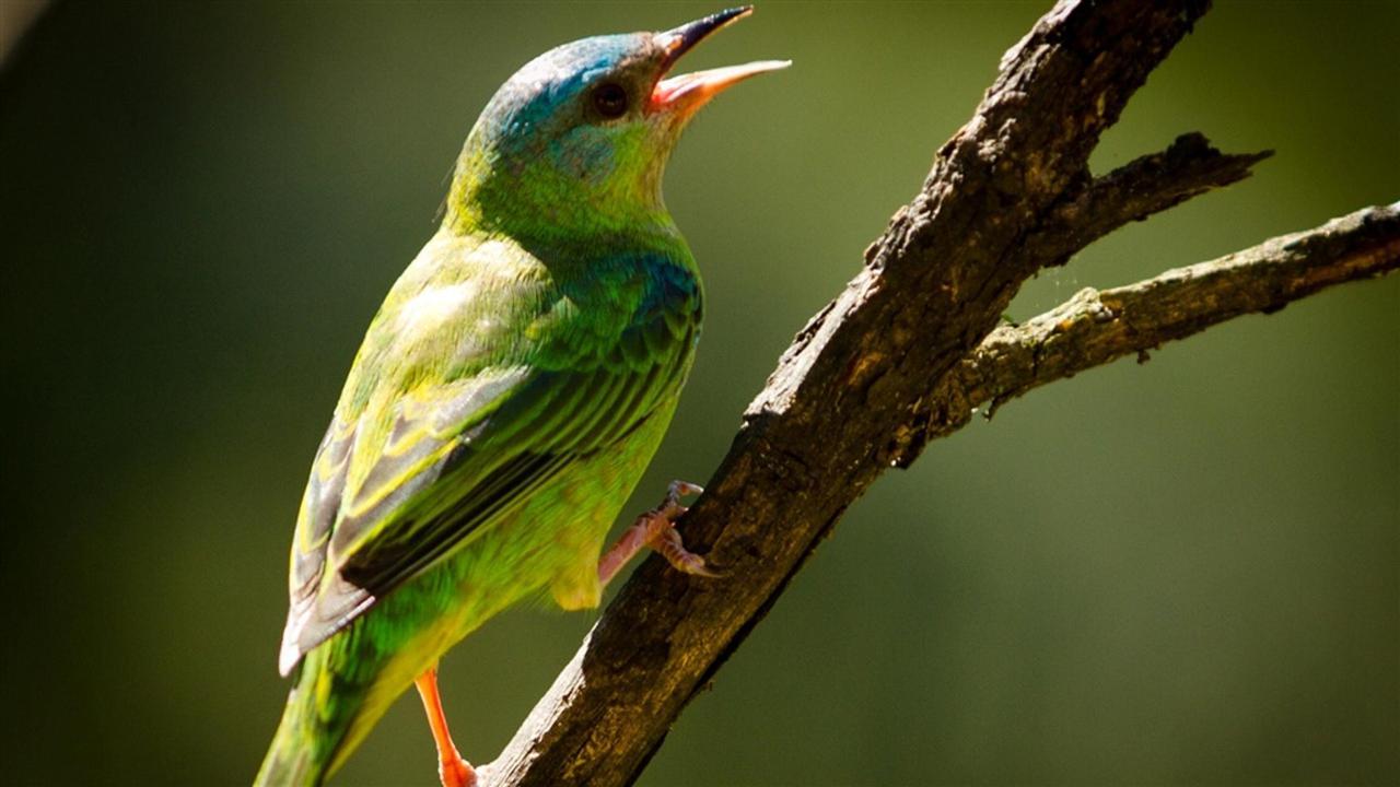 Aves (5) .jpg