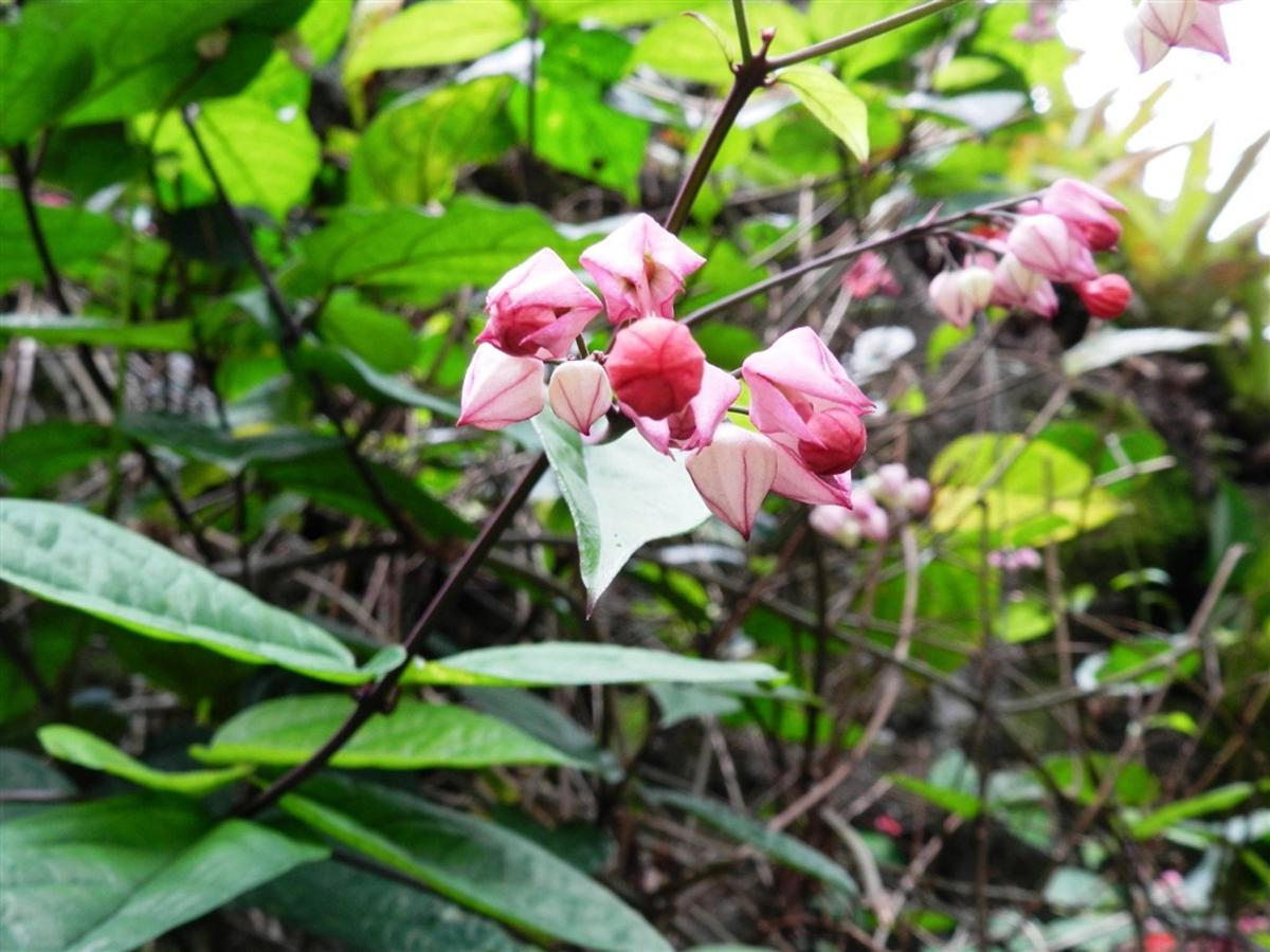 Flores y frutas Pousada Vila das Pedras (4) .jpg