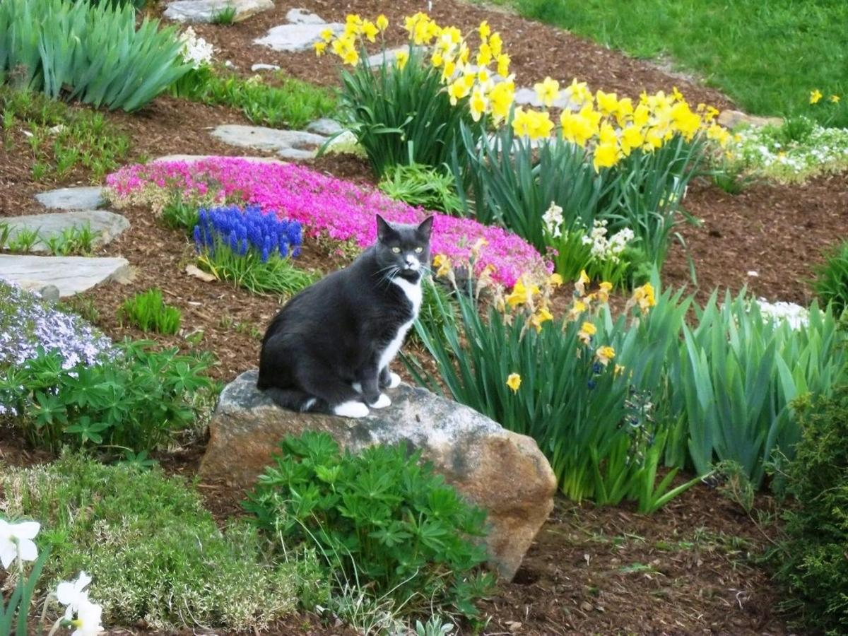 meryl-the-kitty-in-spring-garden-at-coppertoppe16.JPG.1024x0.JPG
