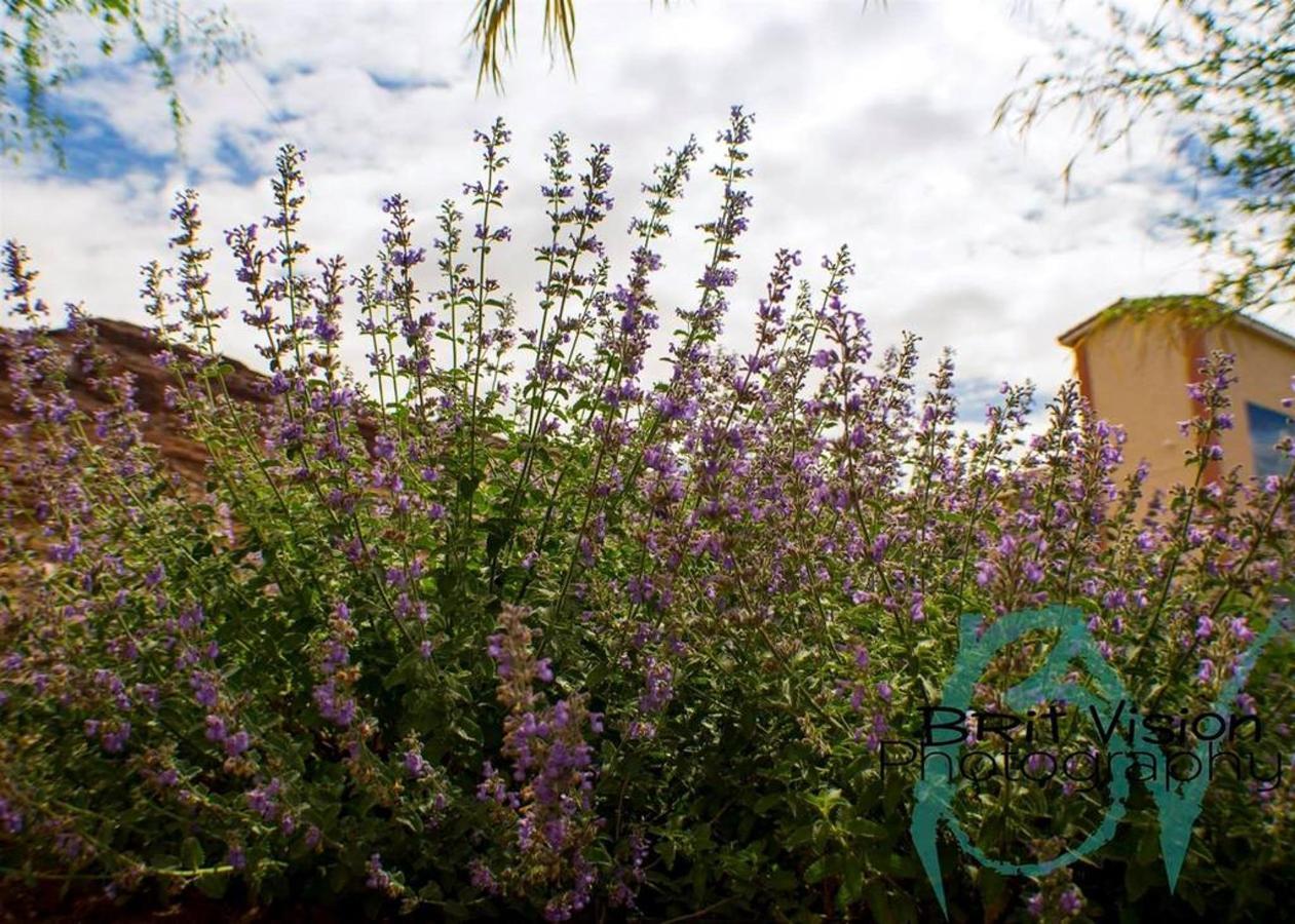 Archway Garden