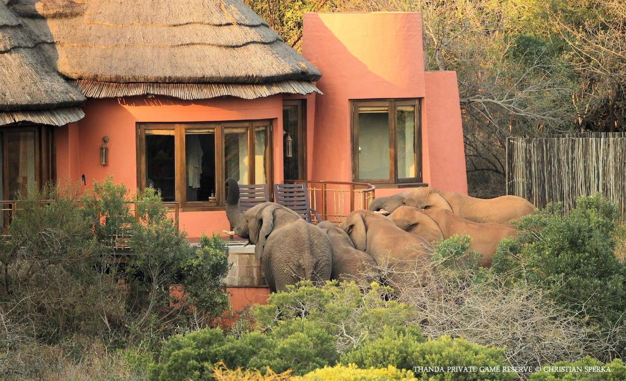 Thanda Wildlife