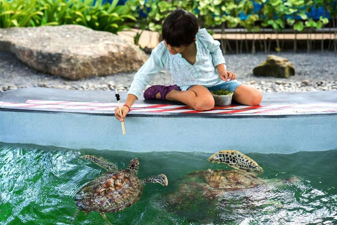 ศูนย์อนุรักษ์เต่าทะเล.jpg