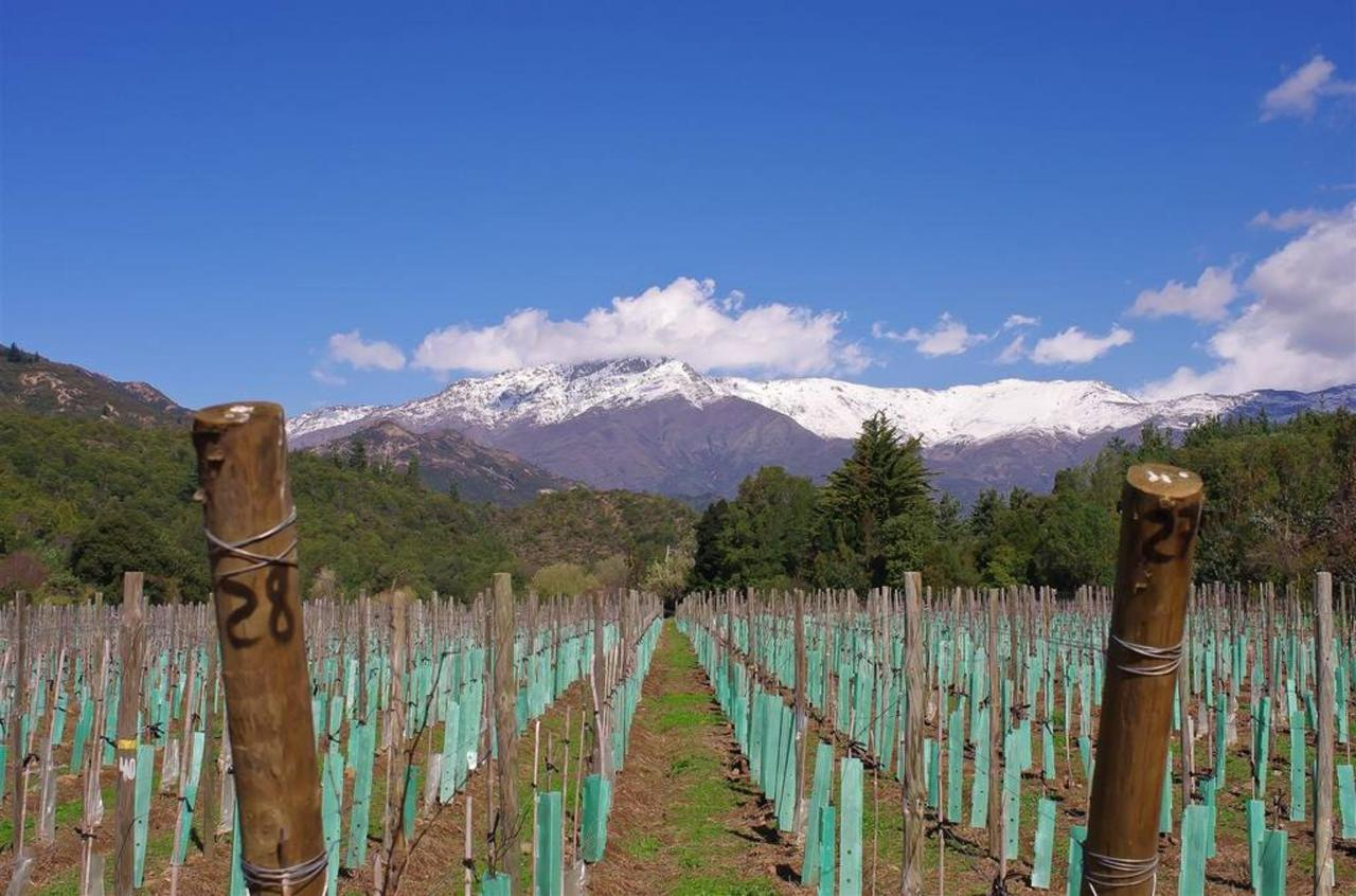 Tumuñan Vineyard Winter 2014.jpg