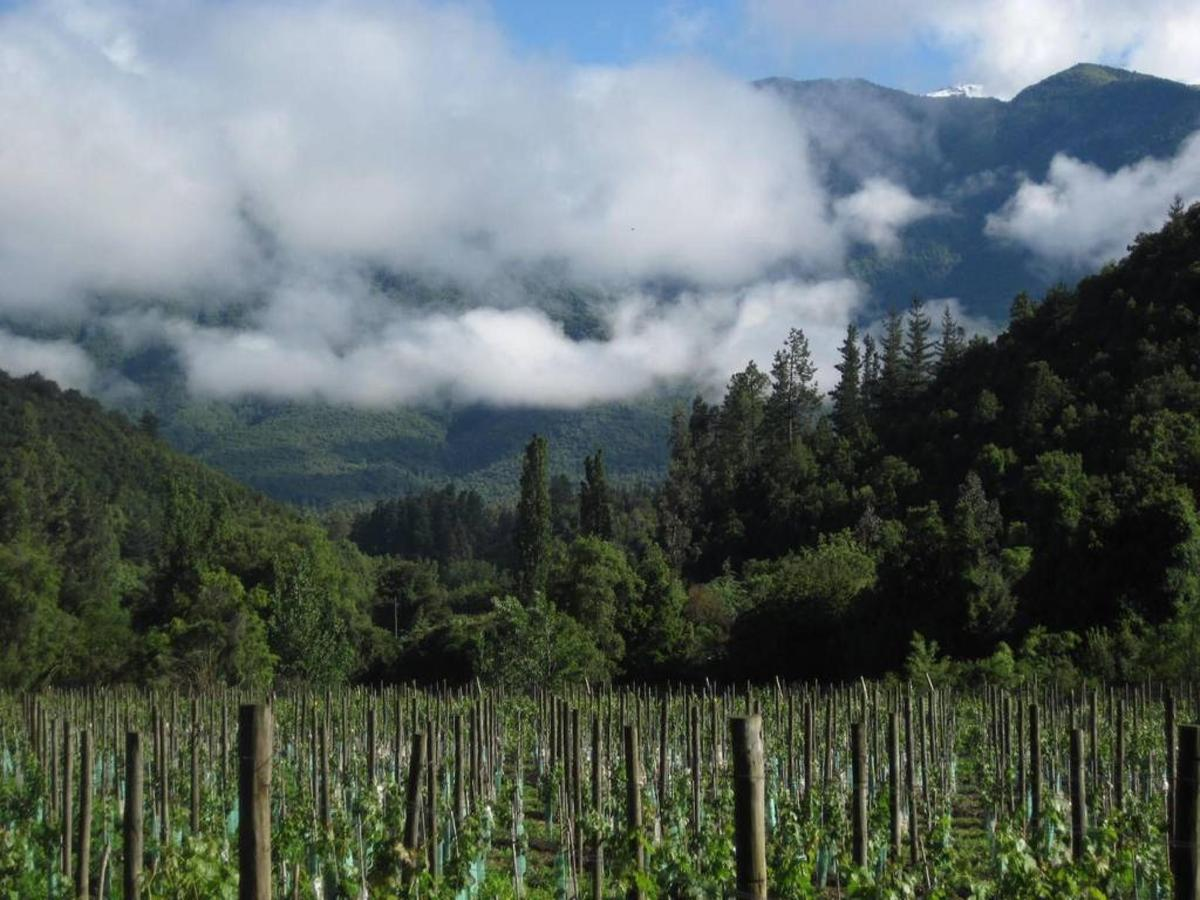Tumuñan Mountain Vineyard.jpg