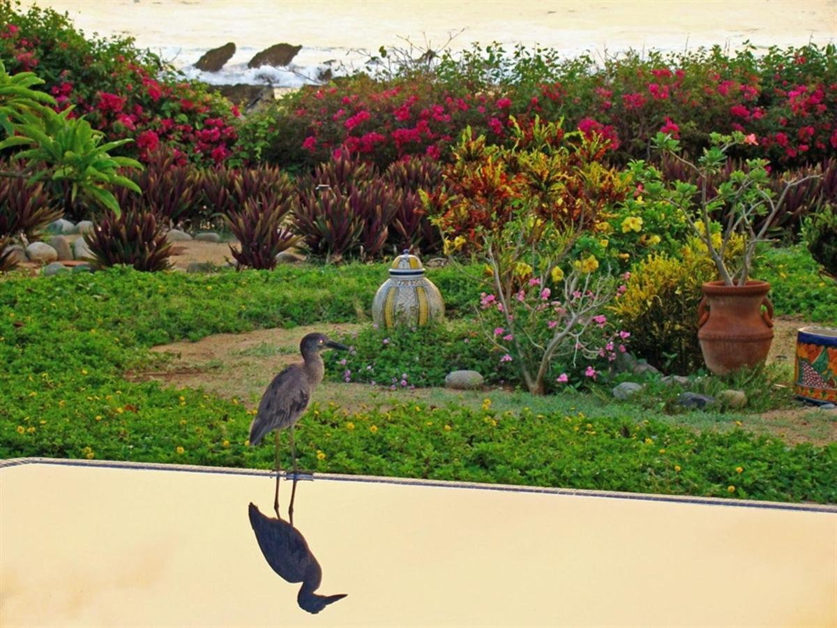 Bird on the Pool.jpg