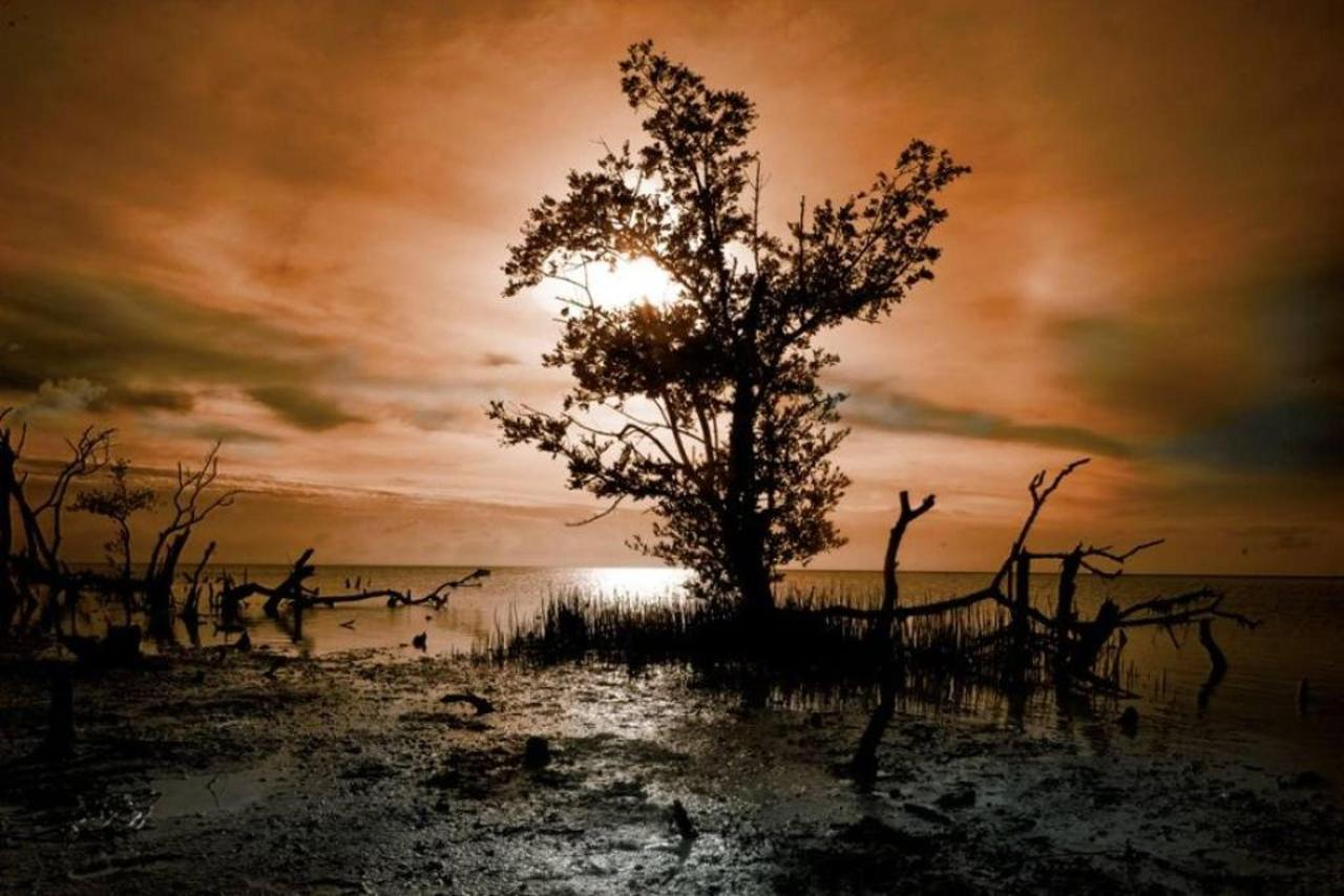 Special mangroves, Galería, CasaSandra Boutique Hotel, Isla Holbox, Mexico.jpg
