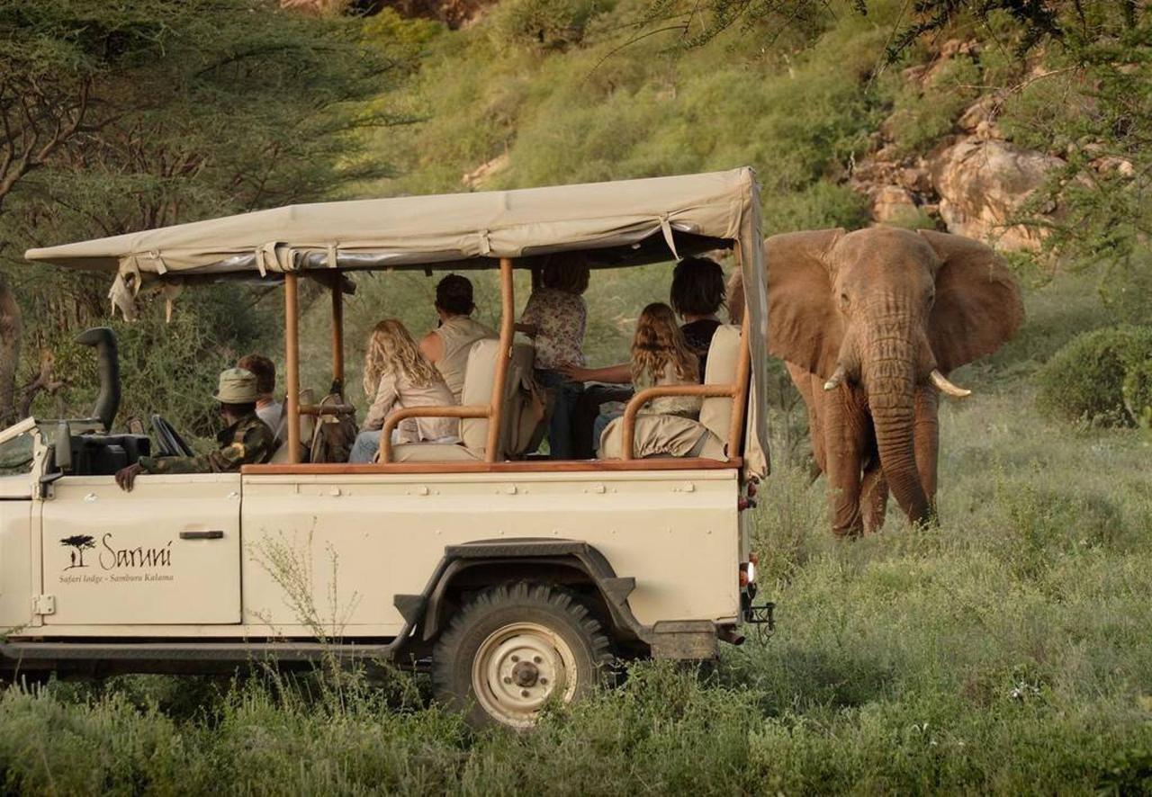 Incredible wildlife encounters.jpg