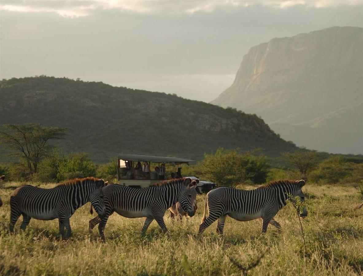 Endangered species - Grevy's Zebra.jpg