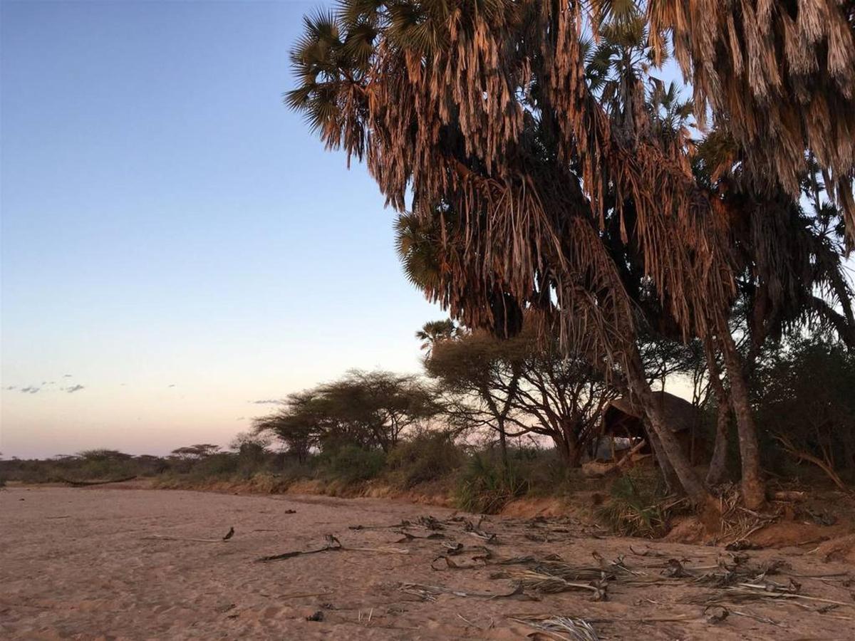 Saruni Rhino Tree banda.jpg