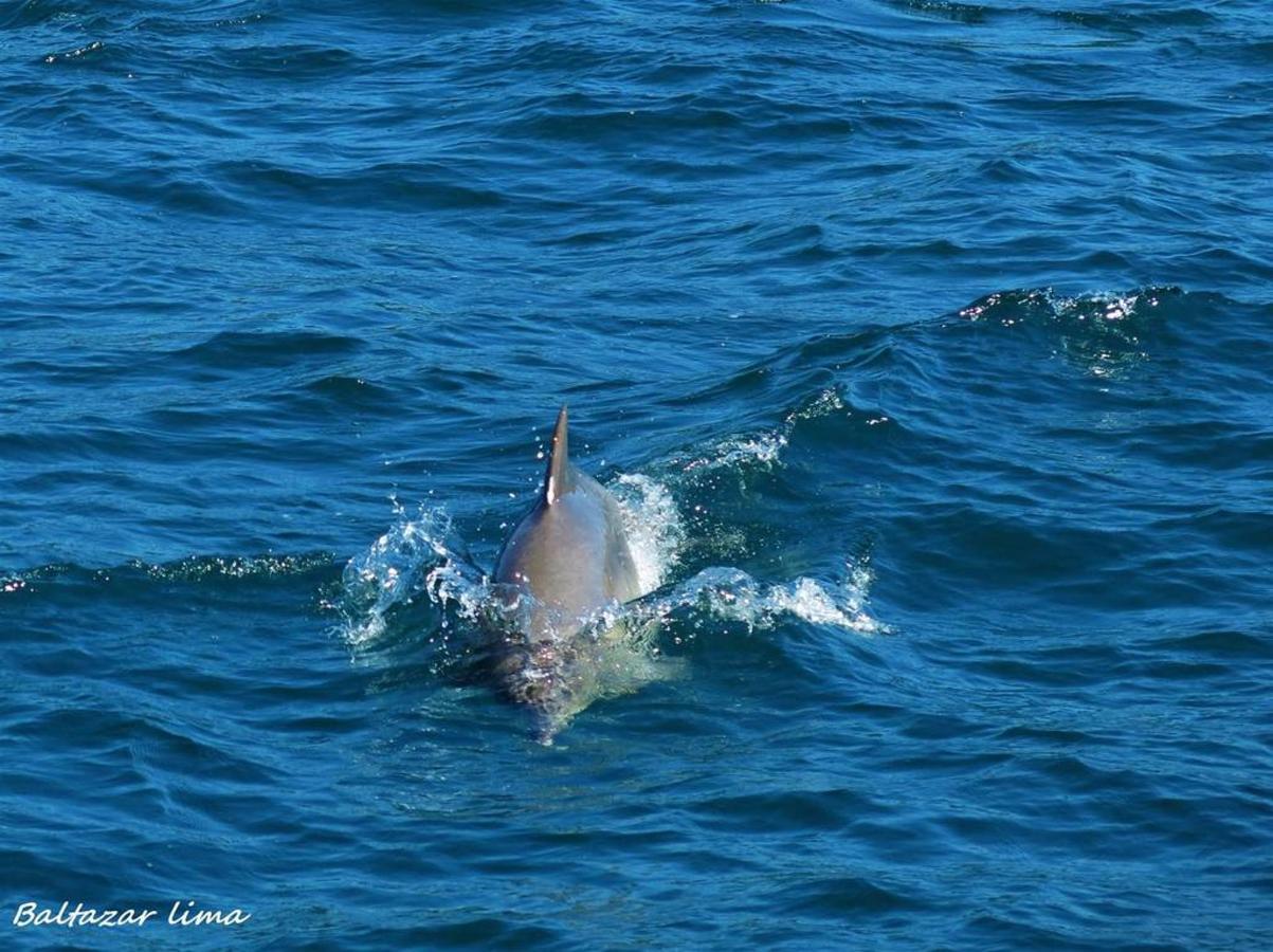 golfinhos-em-paraty.JPG.1024x0.JPG