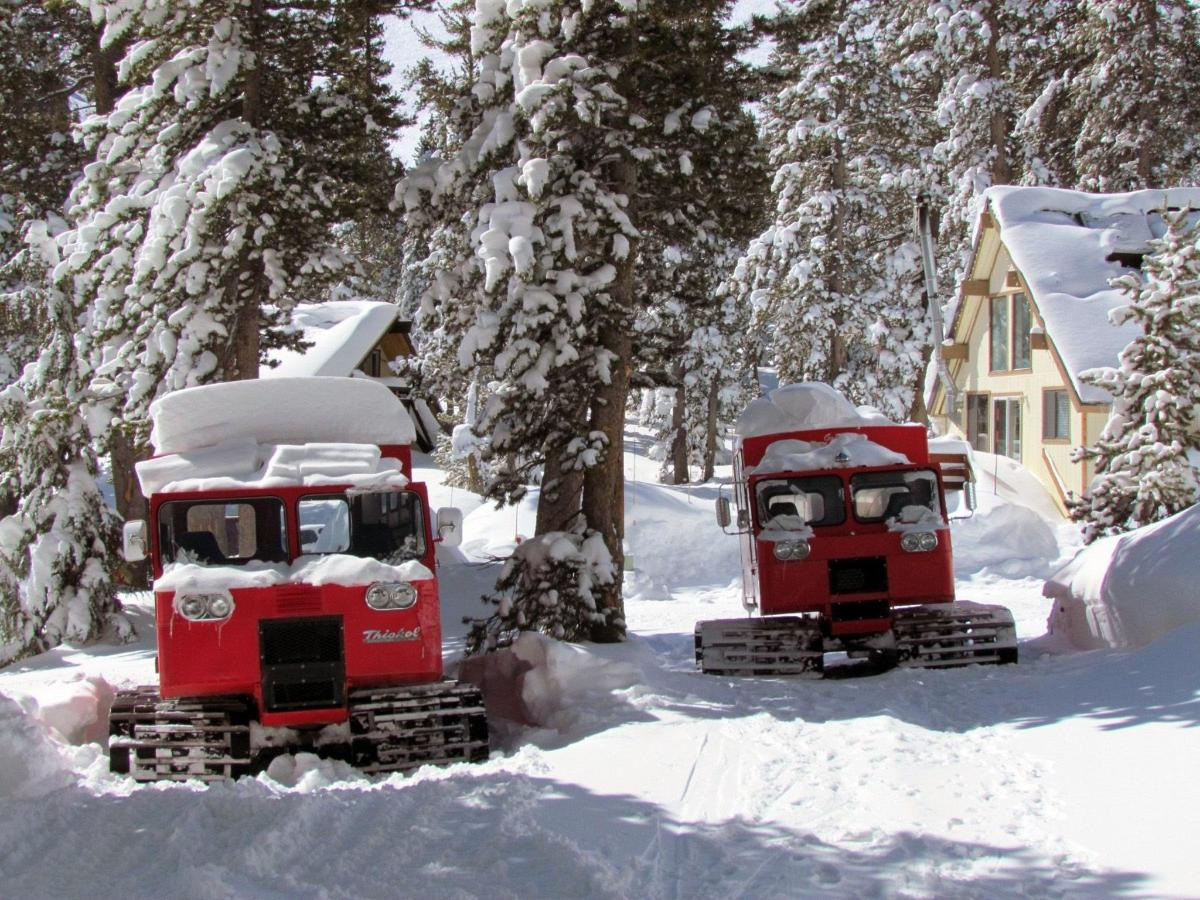 snowcats-great-pic-v2.jpg