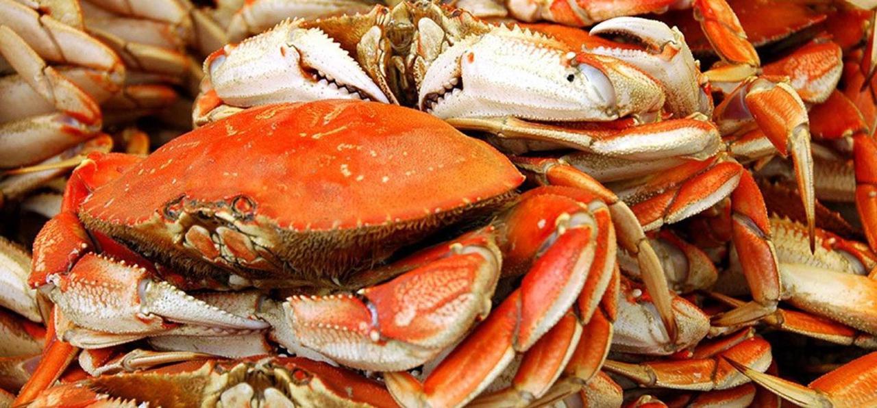 dungeness-crabs-2.jpg.1920x0.jpg