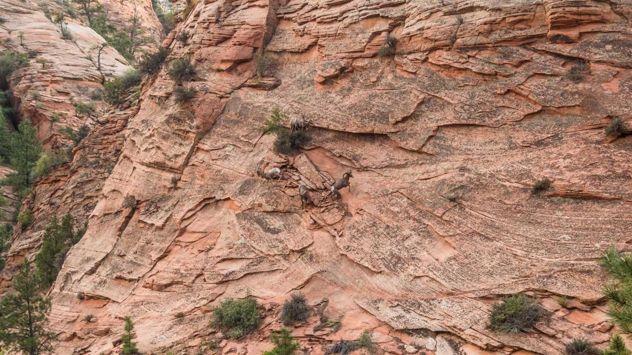 zion-website-4.jpg.1920x0.jpg
