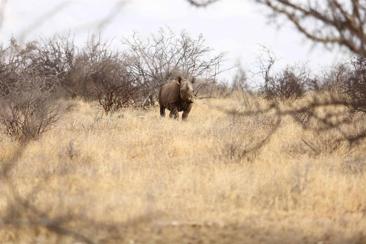 Endangered black rhino metres away.jpg