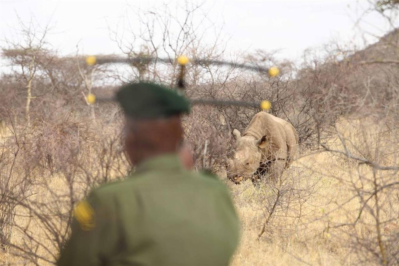 Ranger with transmitter and rhino.jpg