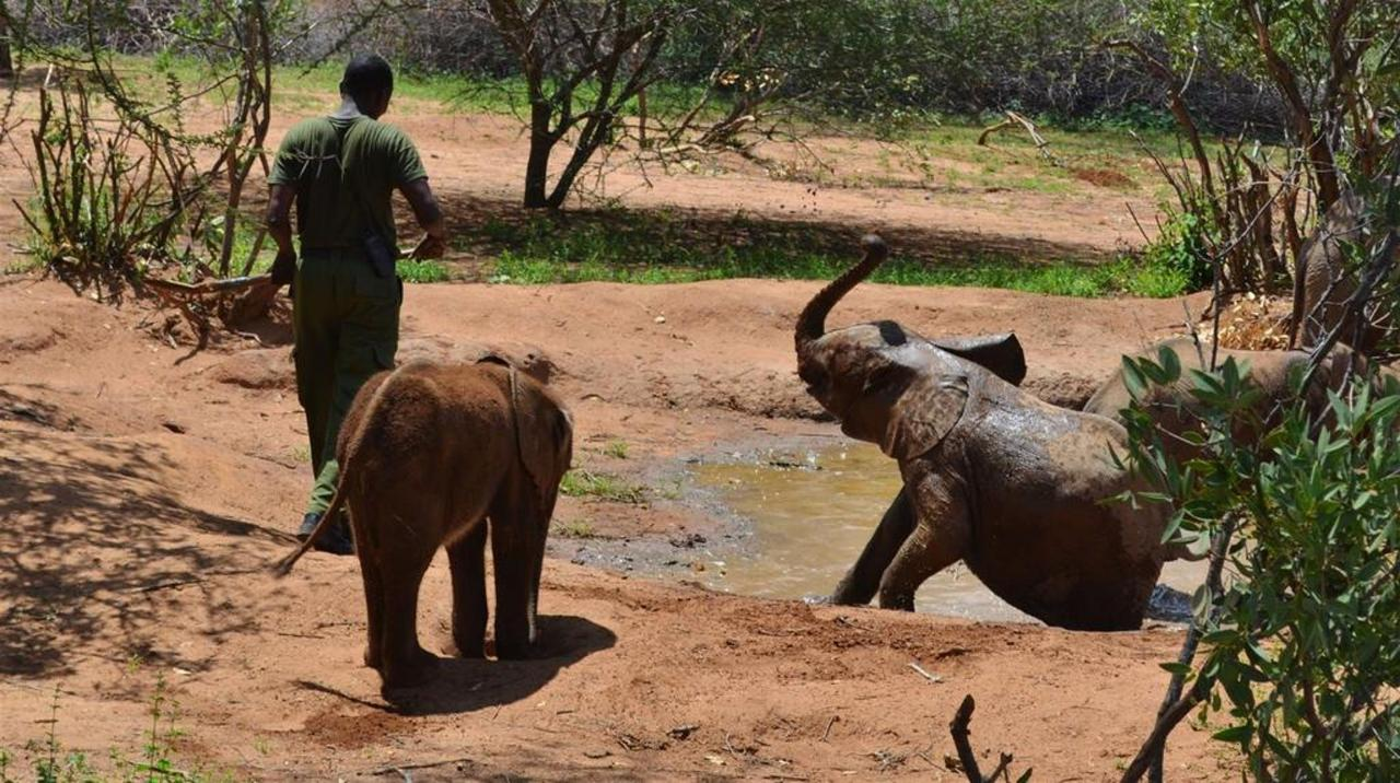 Mud bath time for baby eles.jpg