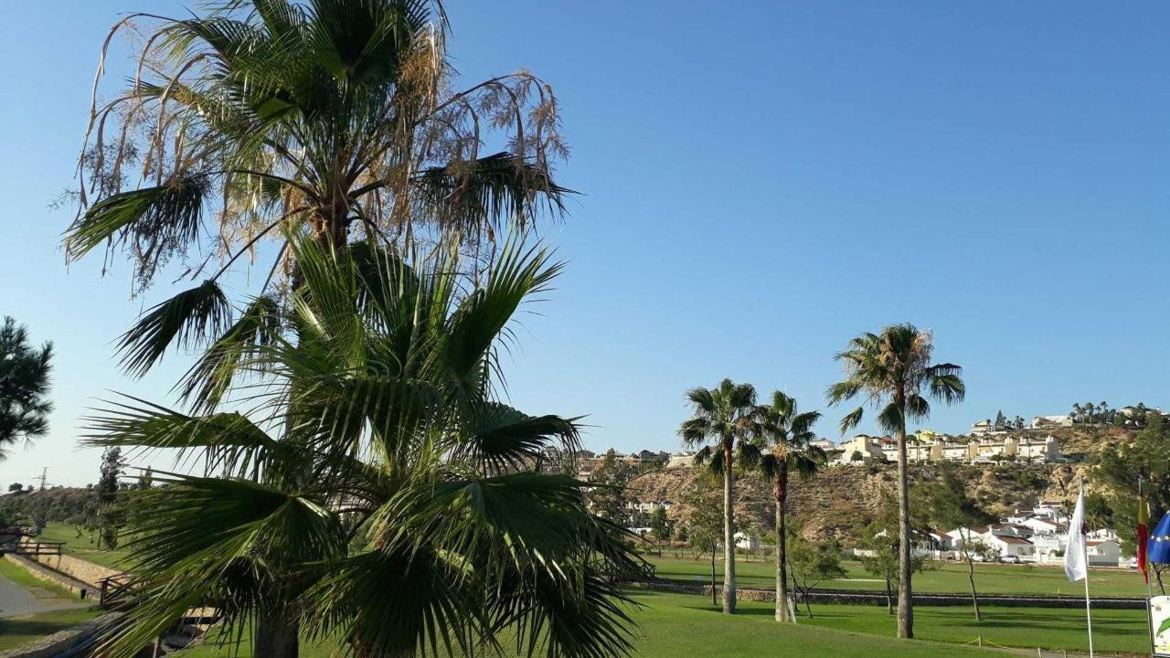 palms and palm trees at la Marquesa golf.jpg