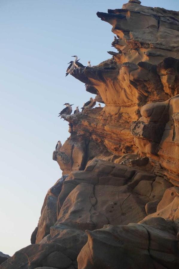 Гнездовье синелапых олушей